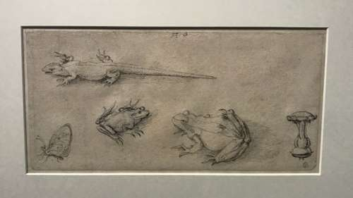 Albrecht Dürer Naturstudien